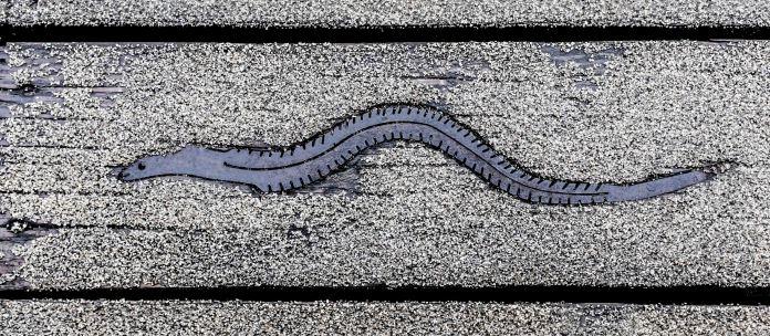 The Eel on the Boardwalk