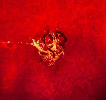 Fiery Heart inside the bridge