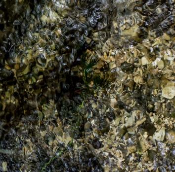 Snakeholme Pastures, chalk stream detail River Hull