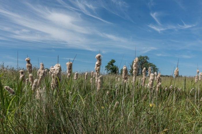 Origins - Snakehole Pastures, Bulrush and Iris